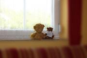 Zwei Teddybären auf der Fensterbank.