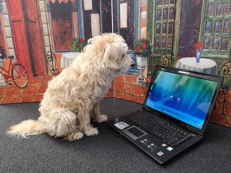 Hund Chiara sitzt vor einem Laptop.