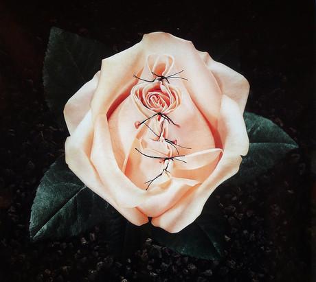 Bild einer Rose, deren Blätter zugenäht sind.