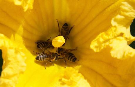 Sexualerziehung jenseits von Bienen und Blumen