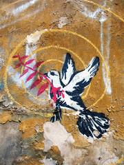 Friedenstaube unter Beschuss